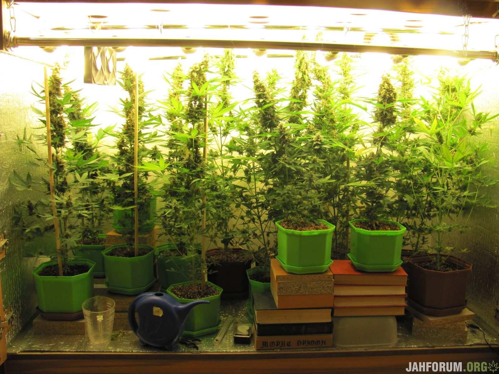 Выращивание марихуаны в гроубоксе как получить разрешение на курение марихуаны